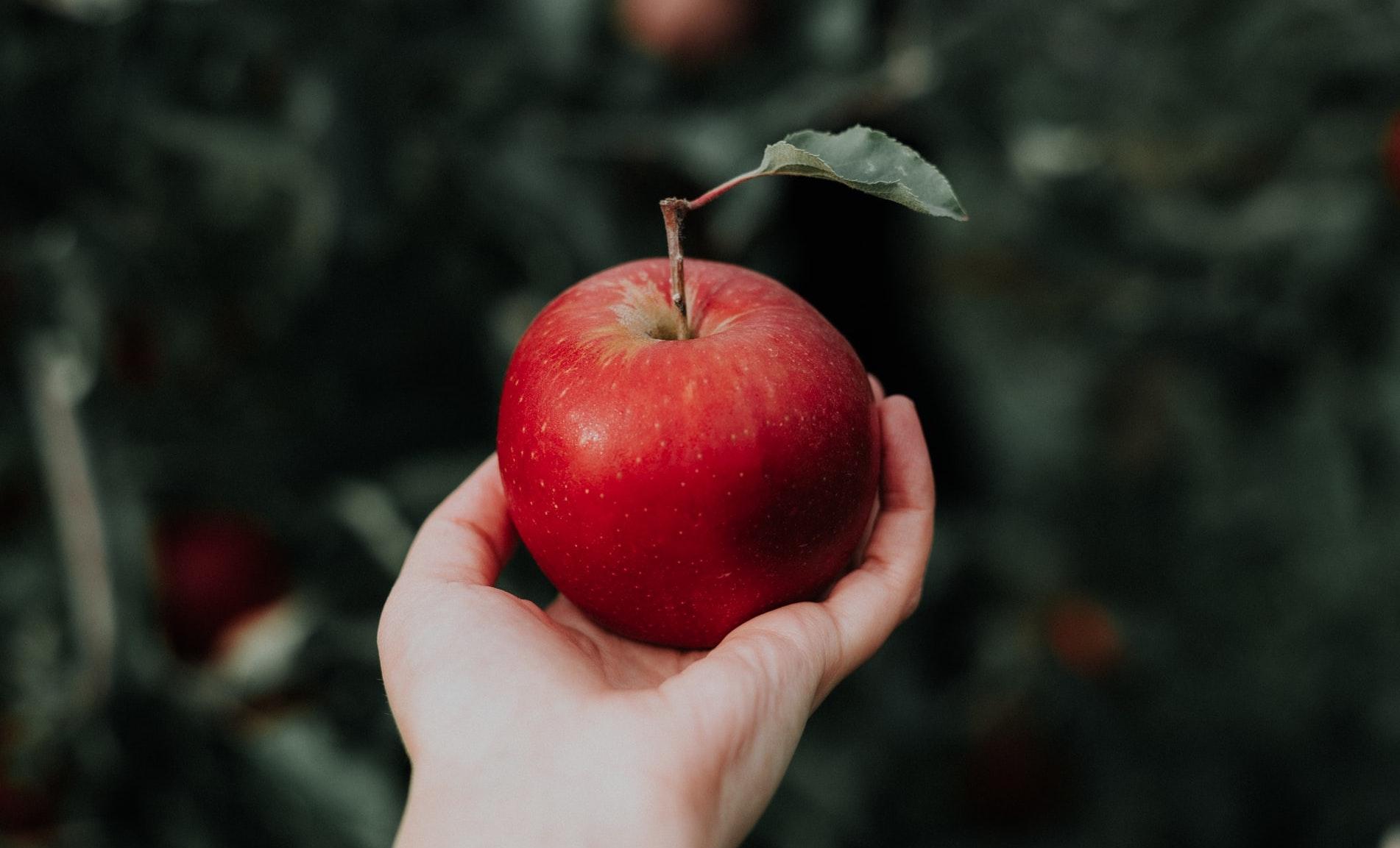 foto di una mano che regge mela